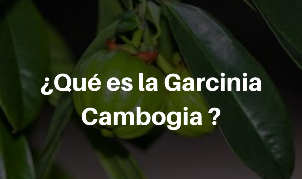 ¿Qué es la Garcinia Cambogia ?