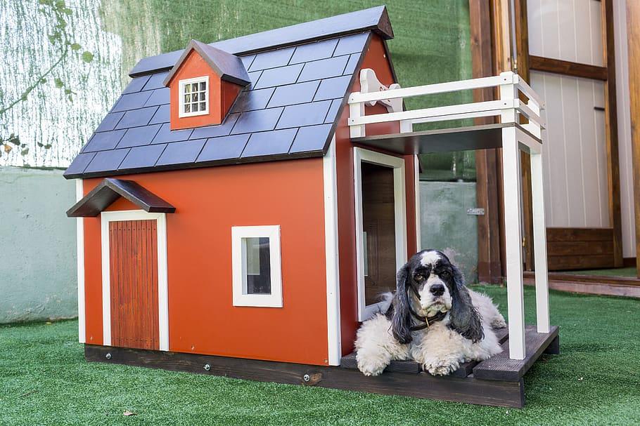 cómo hacer una casa para perro